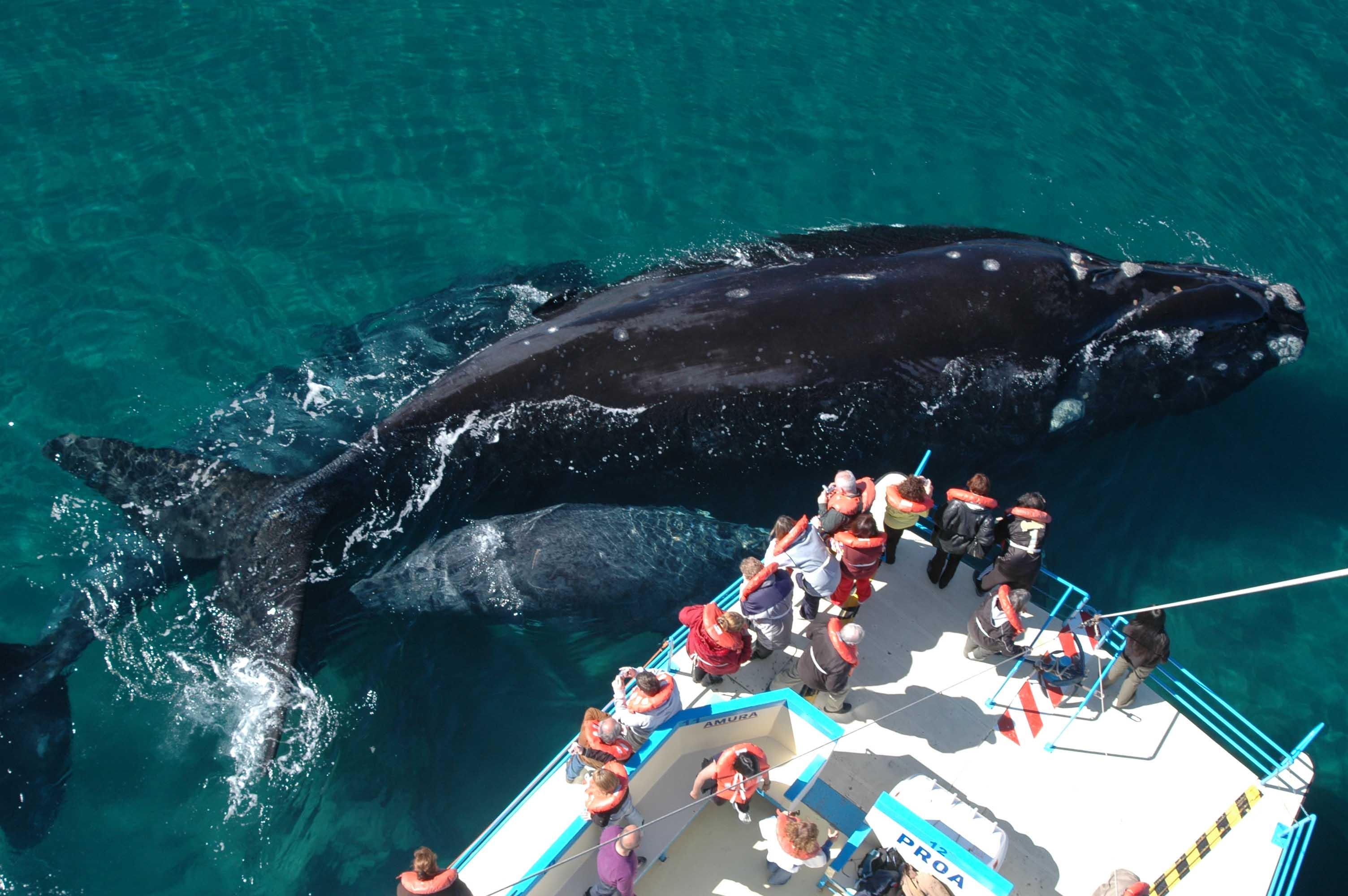 avistaje-de-ballenas-2